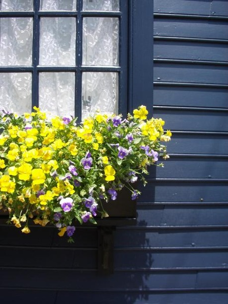 Summer Window Box Photo By Tom Holz